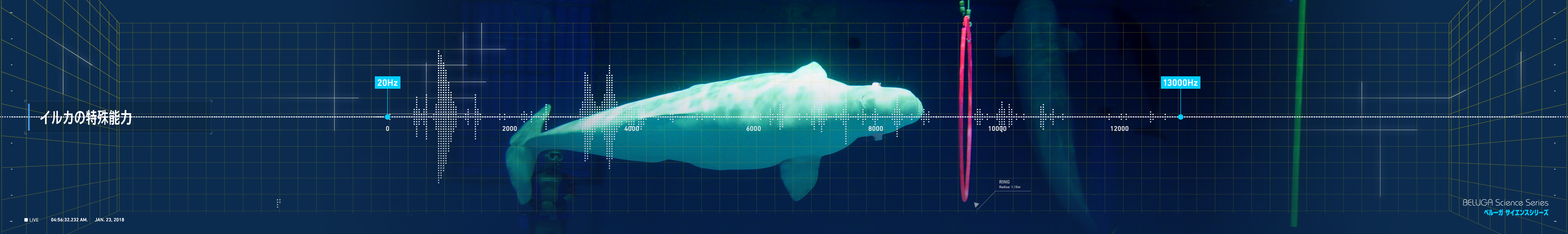 beluga_echolocation.png#asset:222