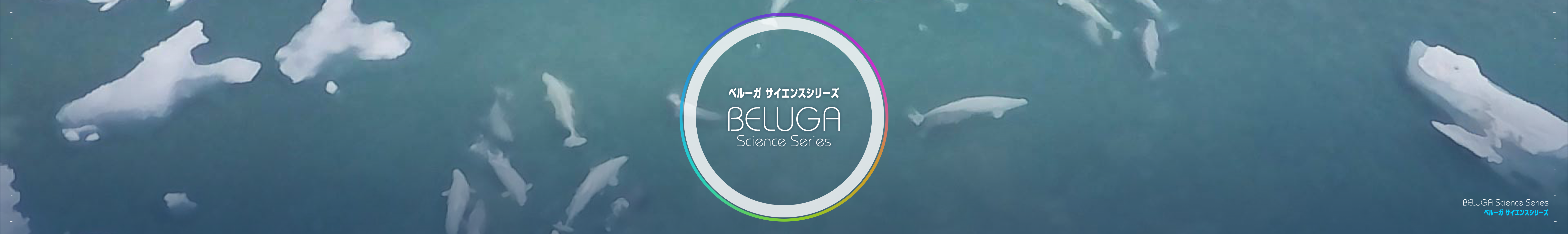 beluga_interval1.png#asset:223